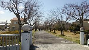 フレスコタウンちはら台周辺の桜並木の遊歩道